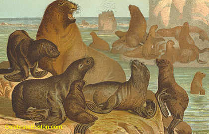 Sea Otters, by Louis Prang