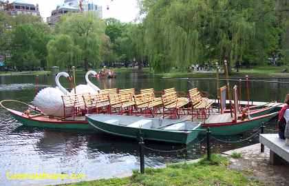 Swan Boat With A Row Boat