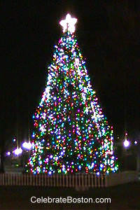 Boston Common Christmas Tree